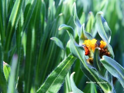 mad's ladybug