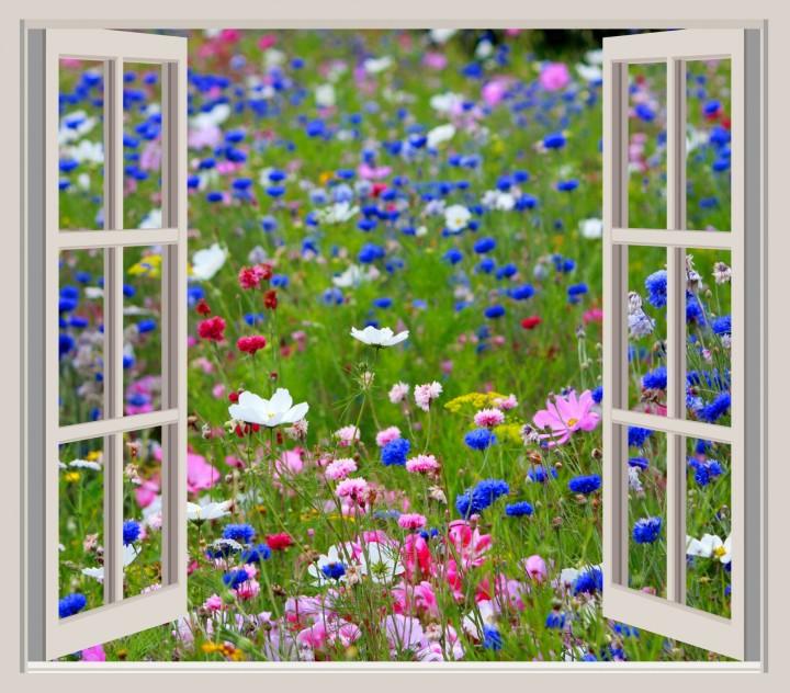 wild-flowers-window-frame-view